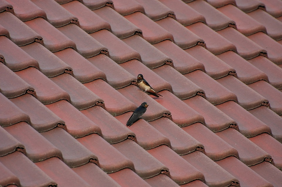 Pests on the roof